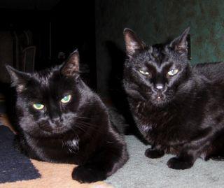 Blogcats1