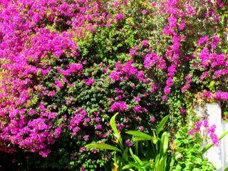 Hacienda_garden6