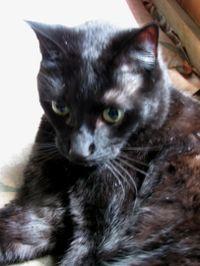 Cat life angelus1