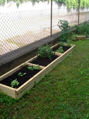 Garden bed1